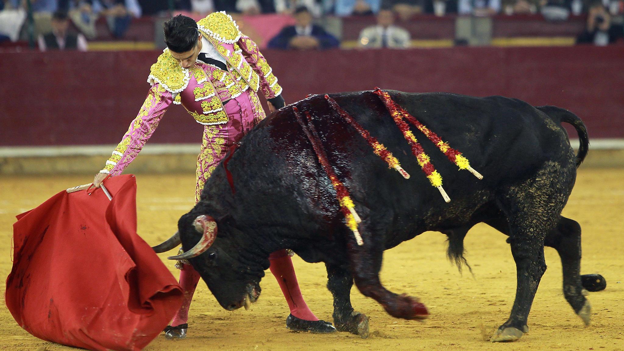 Spanish bull fighter wallpaper Vector Image