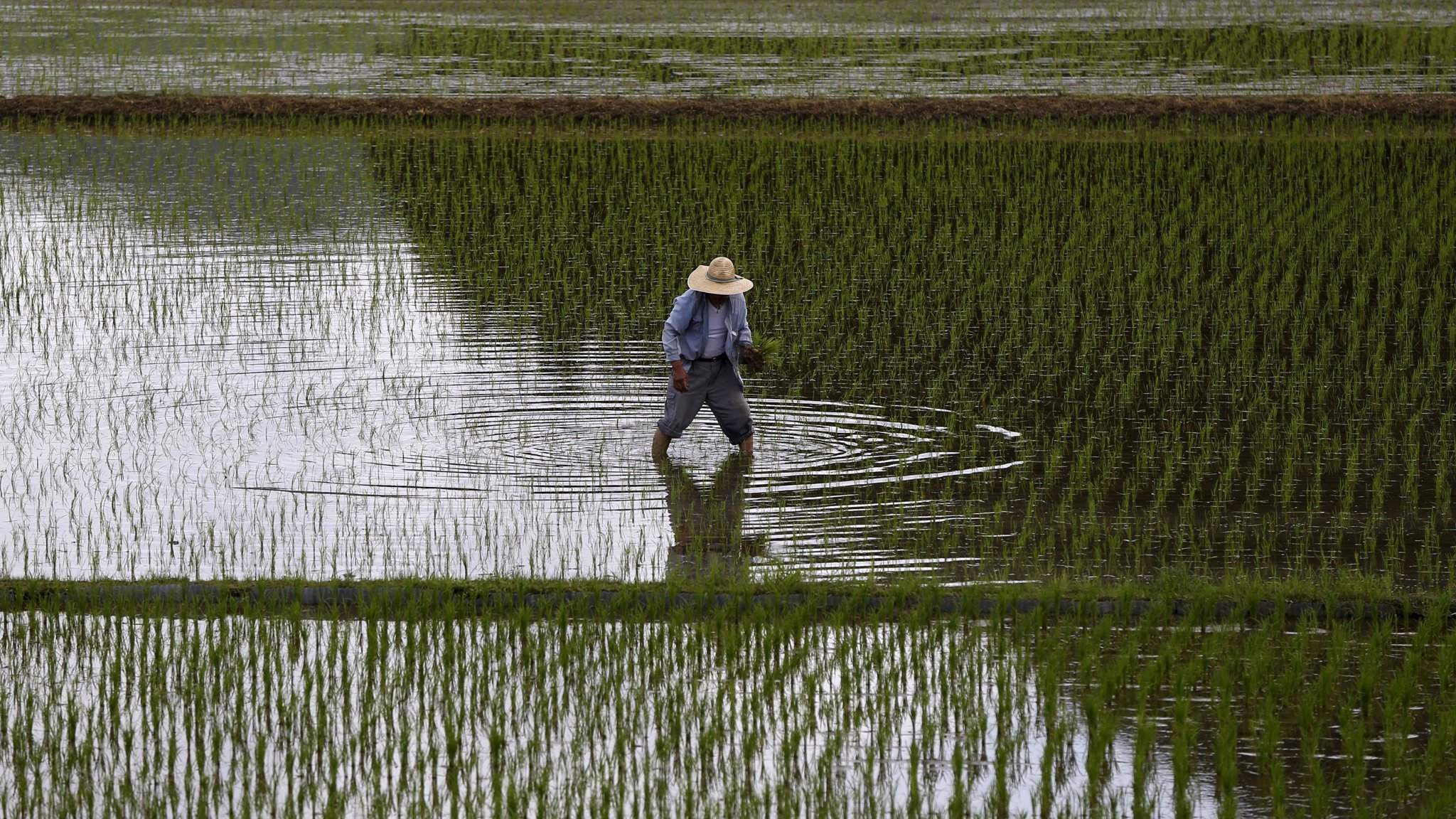 Japan End Of The Rice Age Financial Times