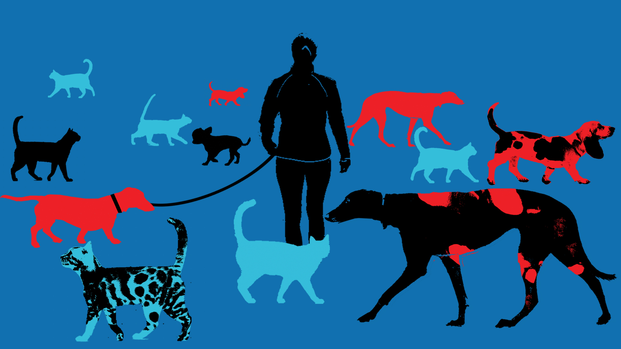 The truth about cat and dog owners | Financial Times