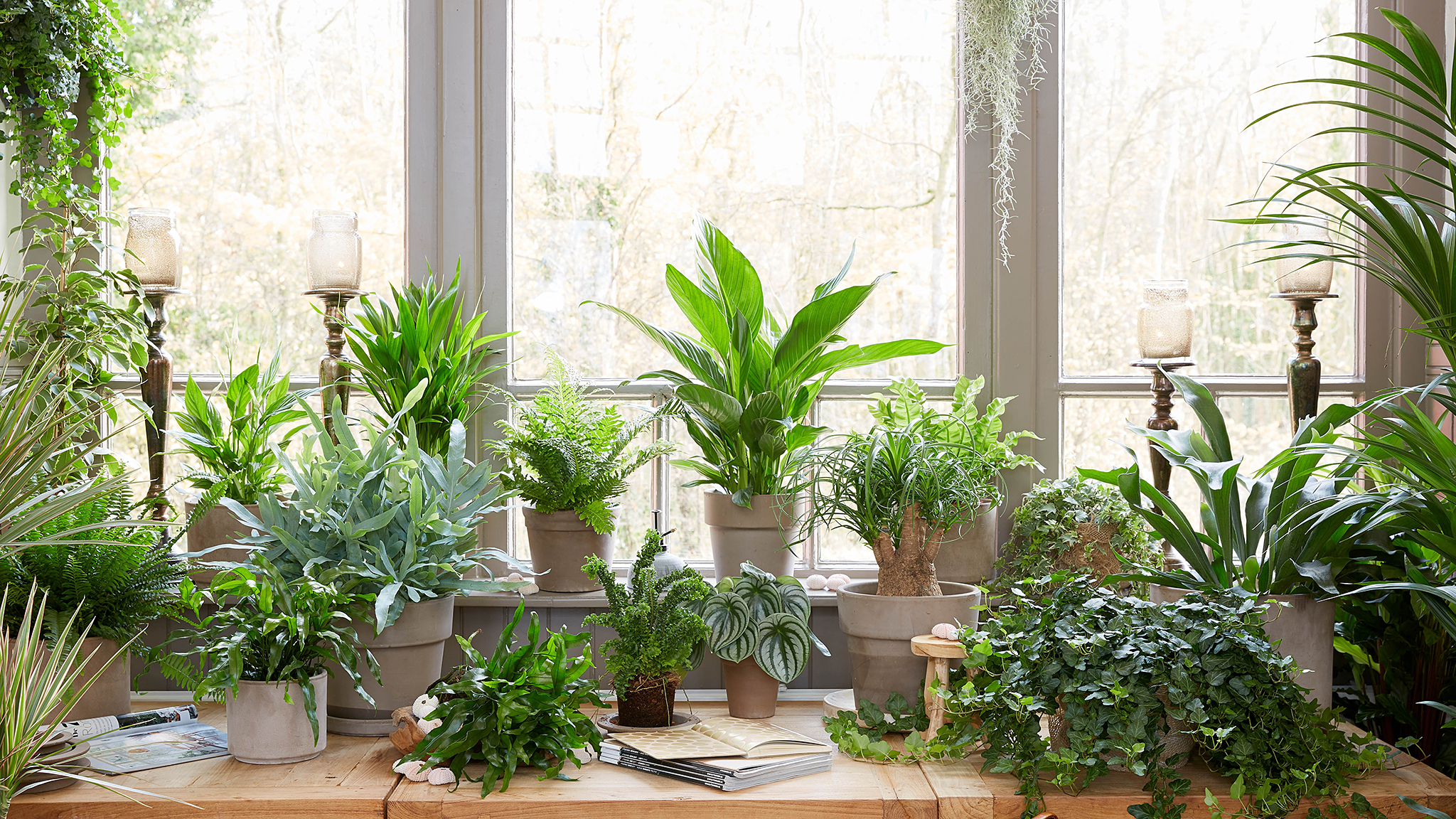 Survival Strategies How To Keep Houseplants Alive Over Winter Financial Times