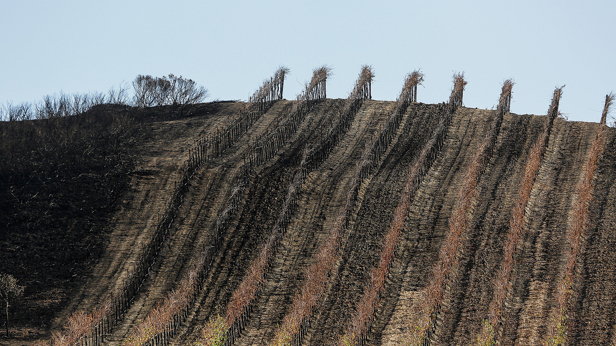 California winemakers face life after fires