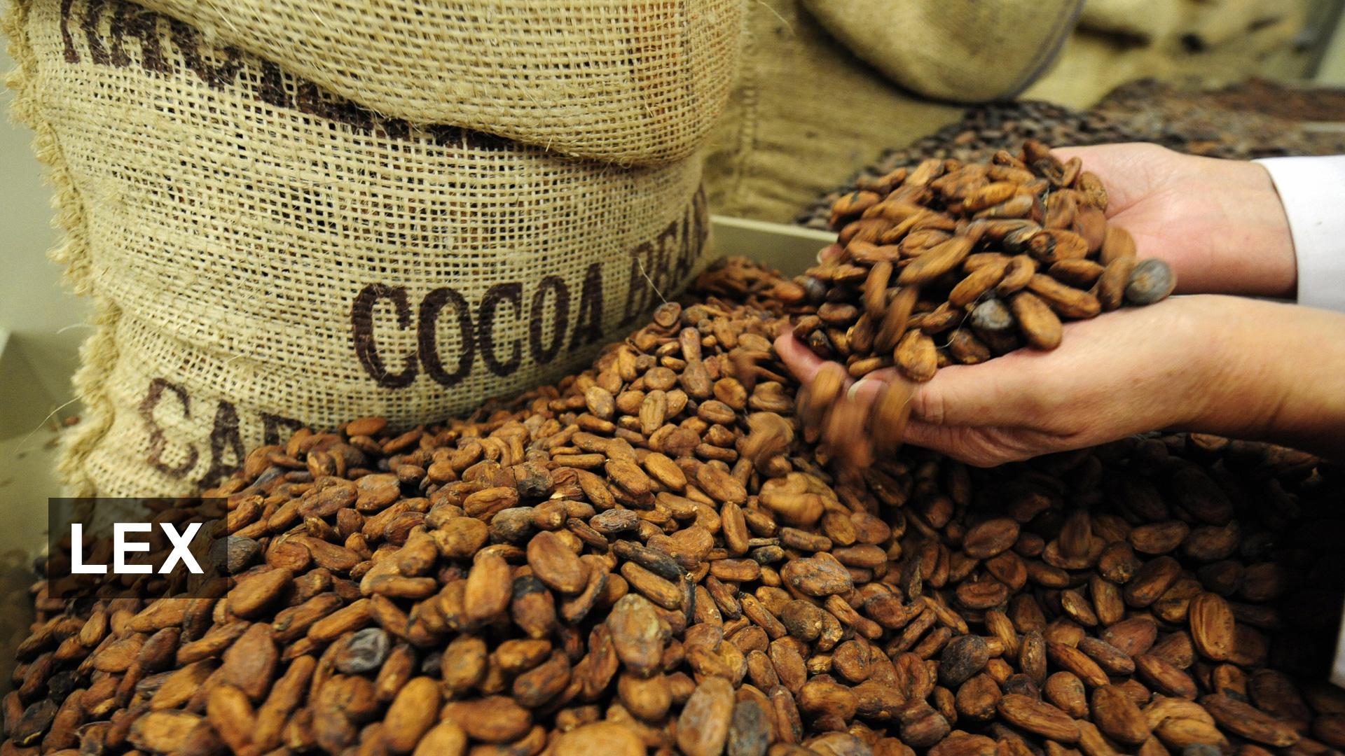 Как сделать ферму какао бобов