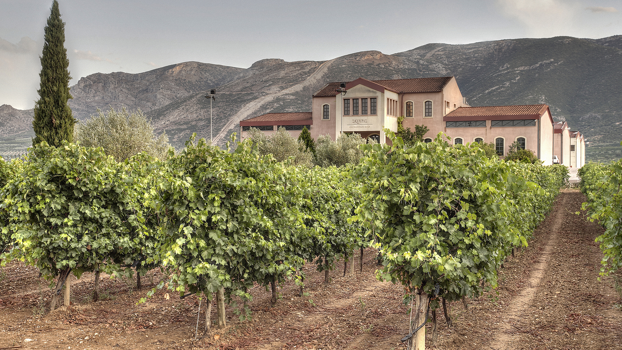 Wine In Greece Rediscovered Country Financial Times