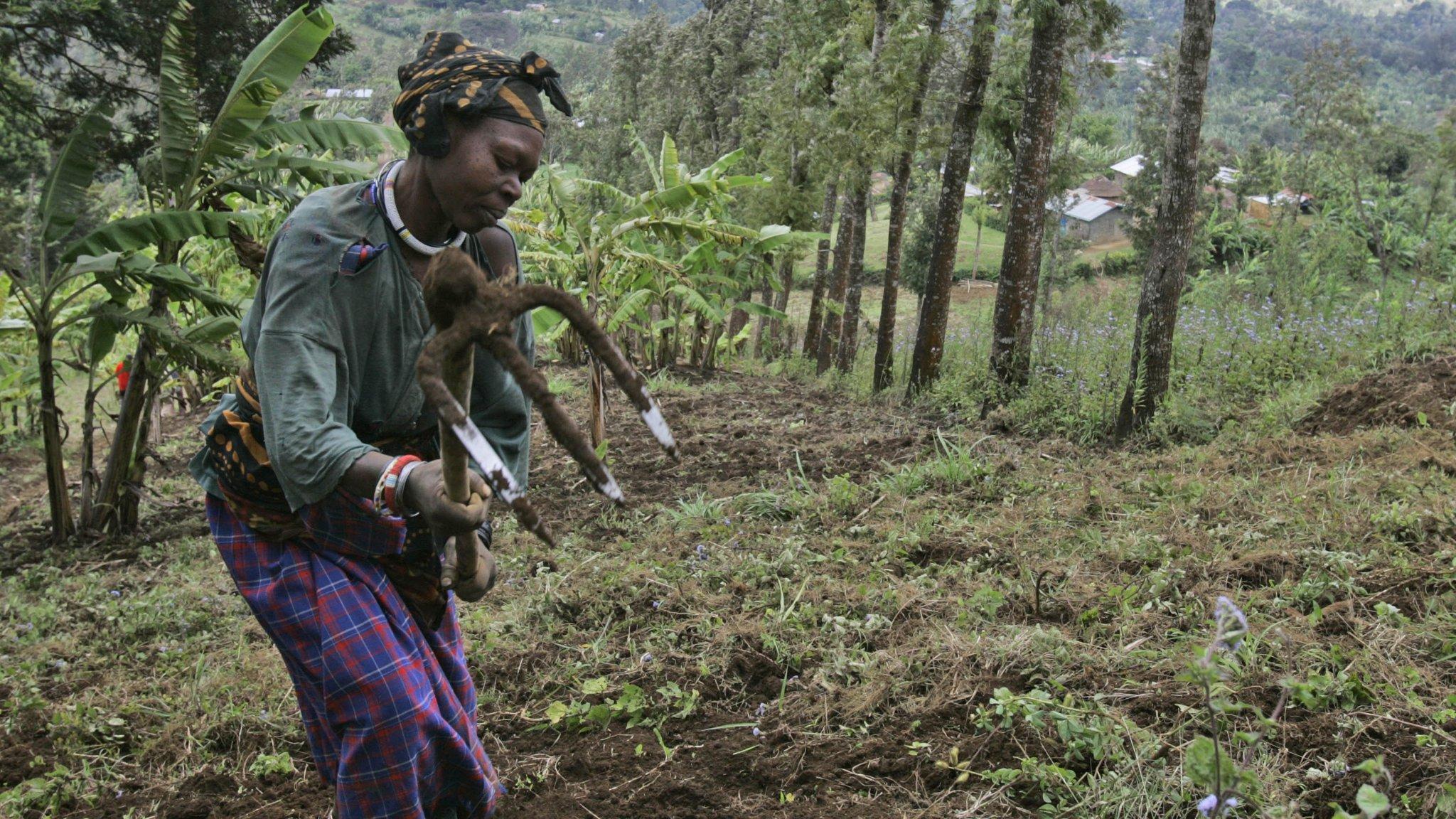 Create jobs or face chaos is the choice awaiting Africa
