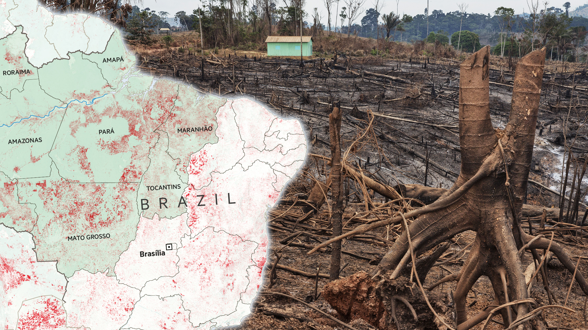Brazil Rainforest Pays The Price For The Country S Crisis