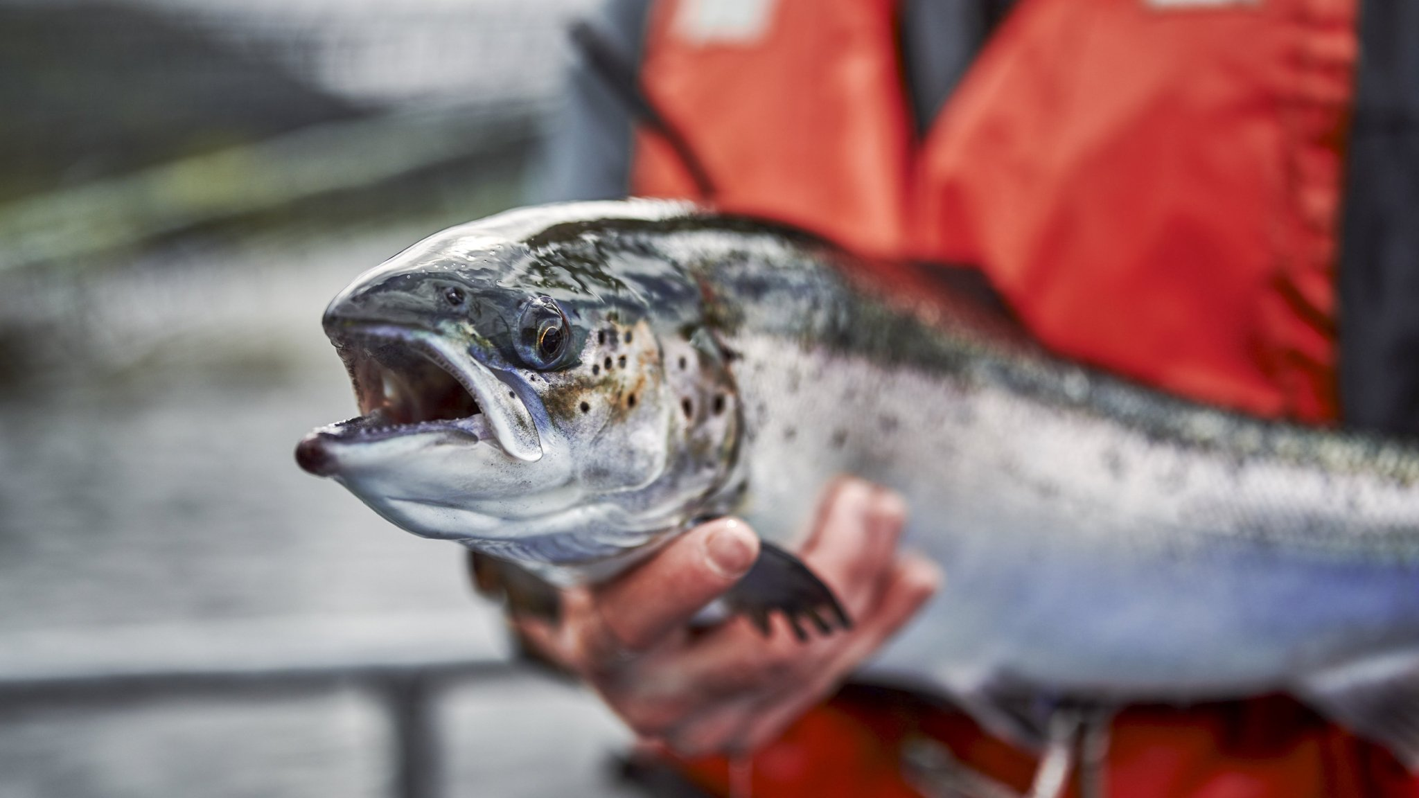 Tensions surface over Scottish fish farm plan