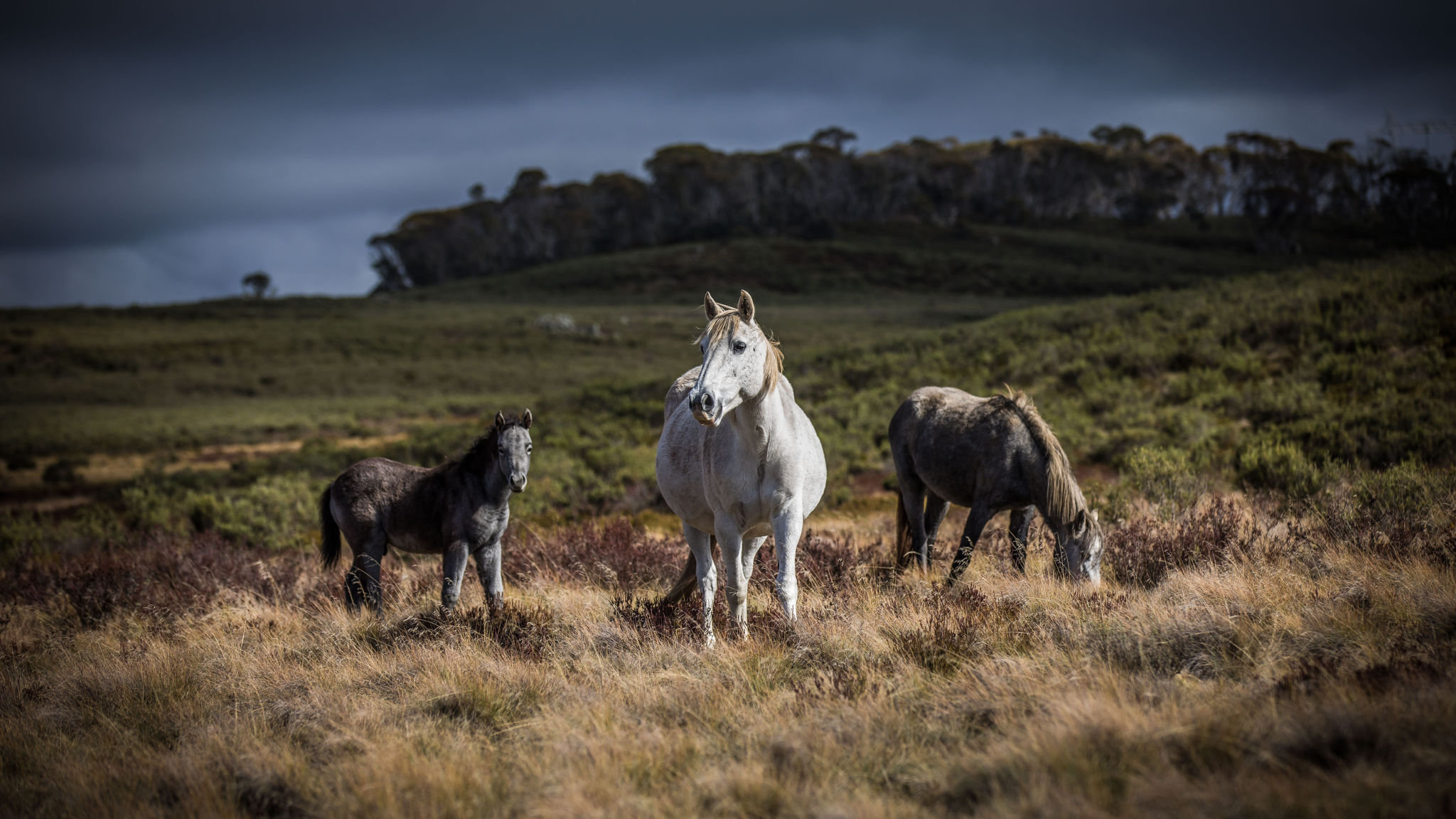 Passions Run High Over Future Of Australia S Wild Horses Financial Times
