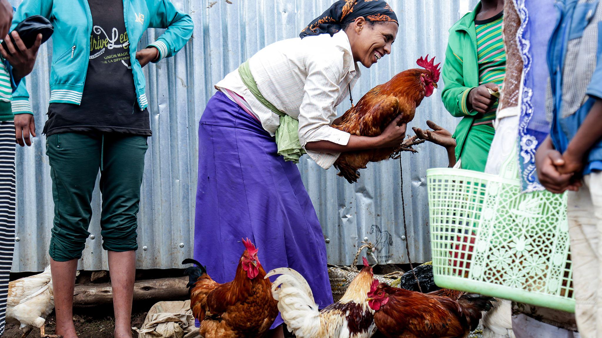 EthioChicken: Ethiopia's well-hatched idea | Financial Times