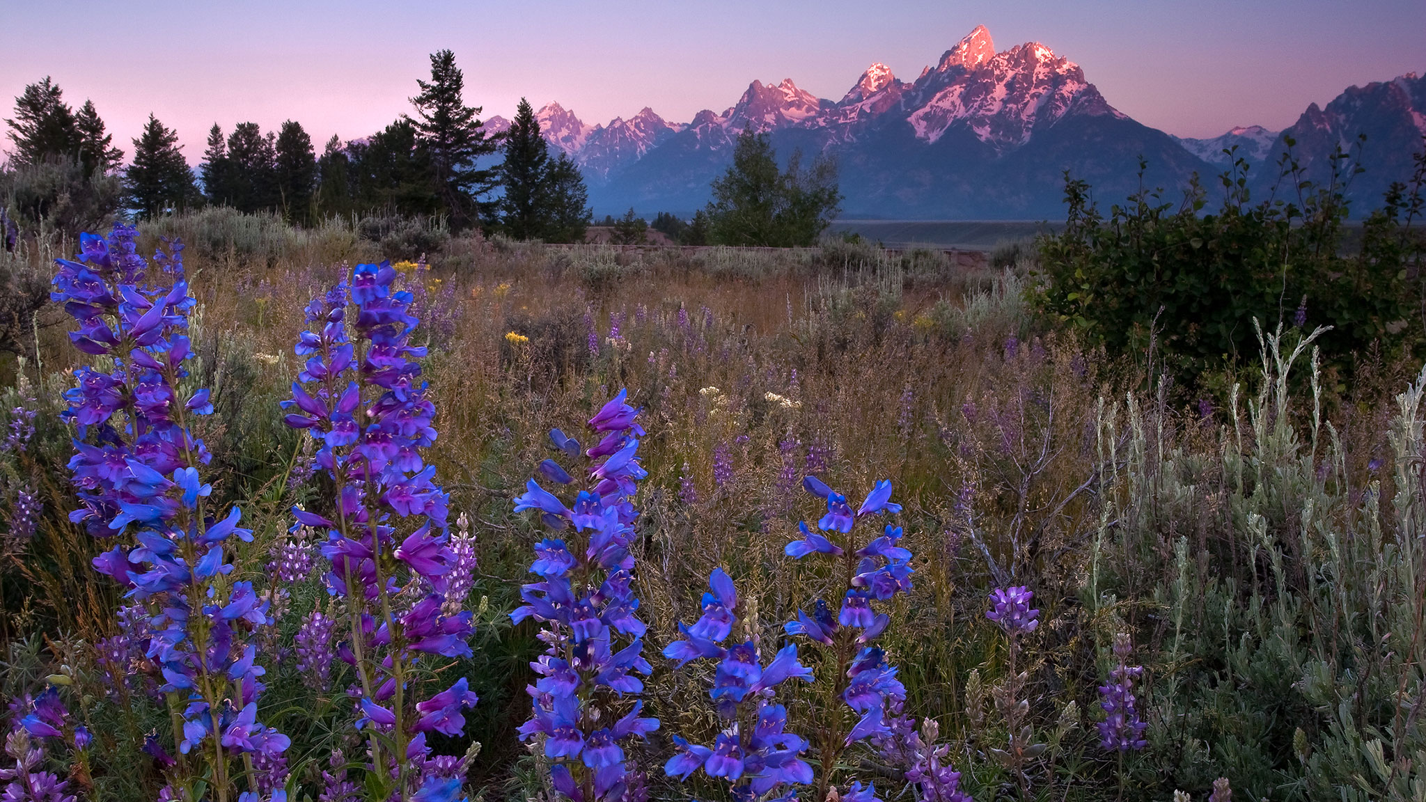 Wyoming Where The Wild Flowers Are Financial Times
