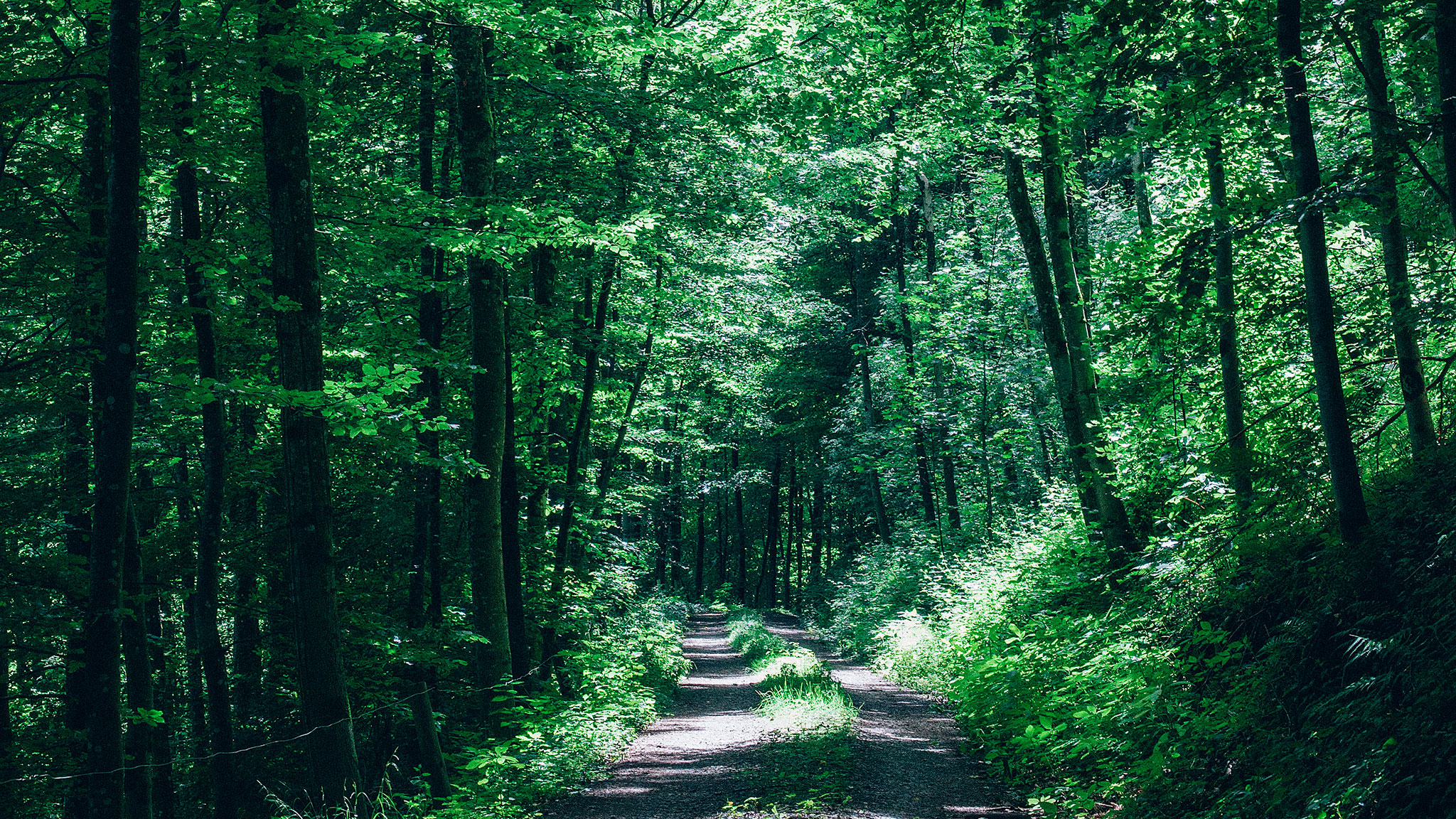 germany  its forests and one architect u2019s vision of green