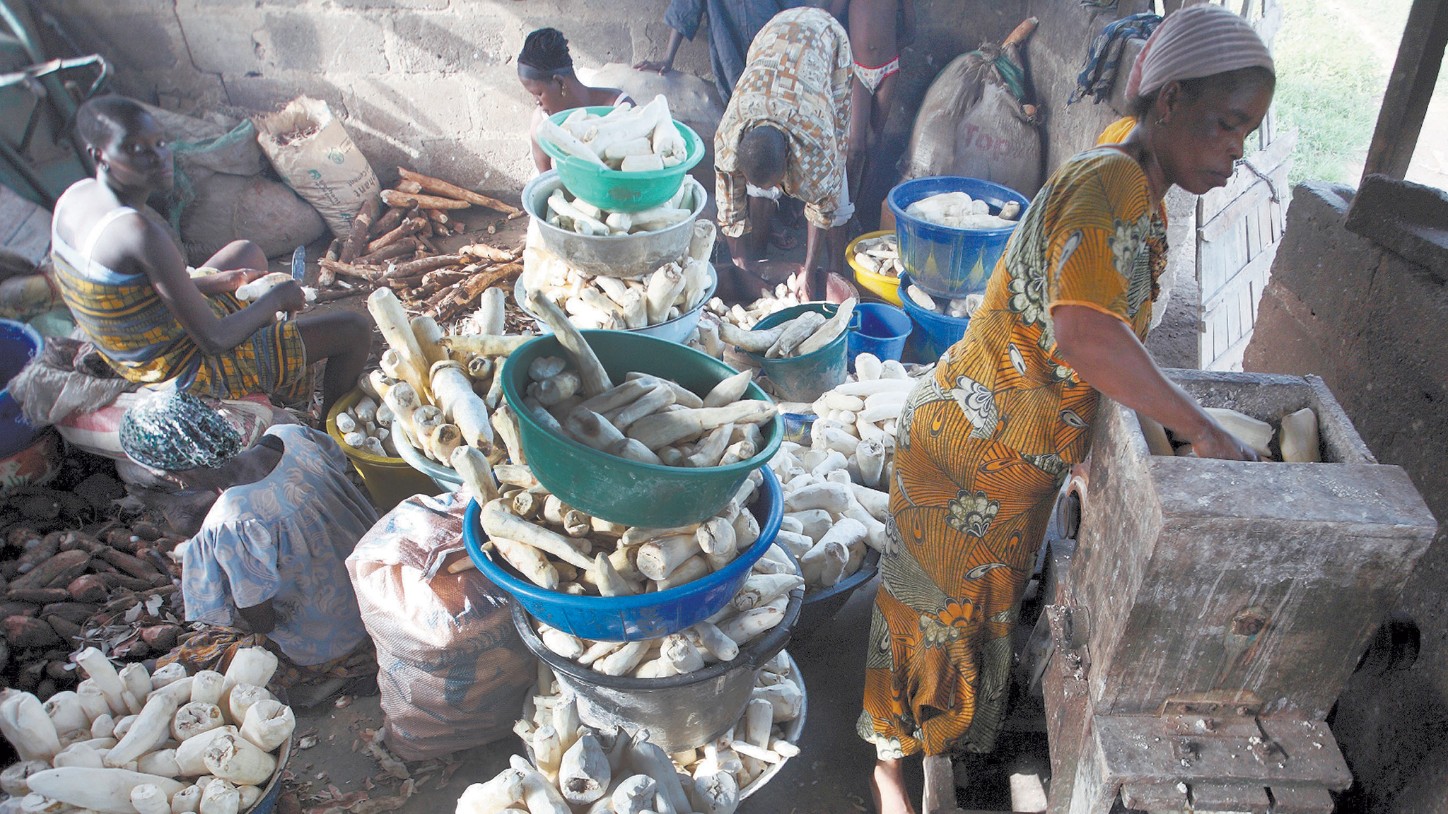 African farming: cassava now the centre of attention