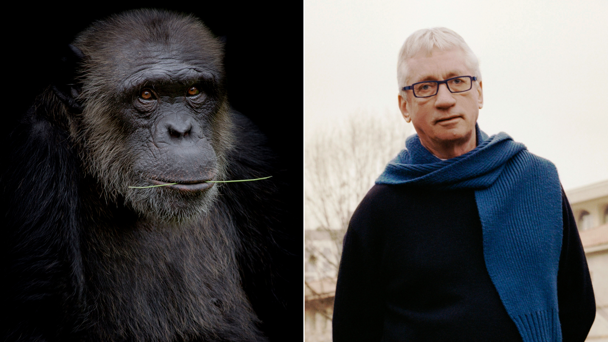 Free Ape Sex Videos frans de waal: 'we are very much like primates'   financial