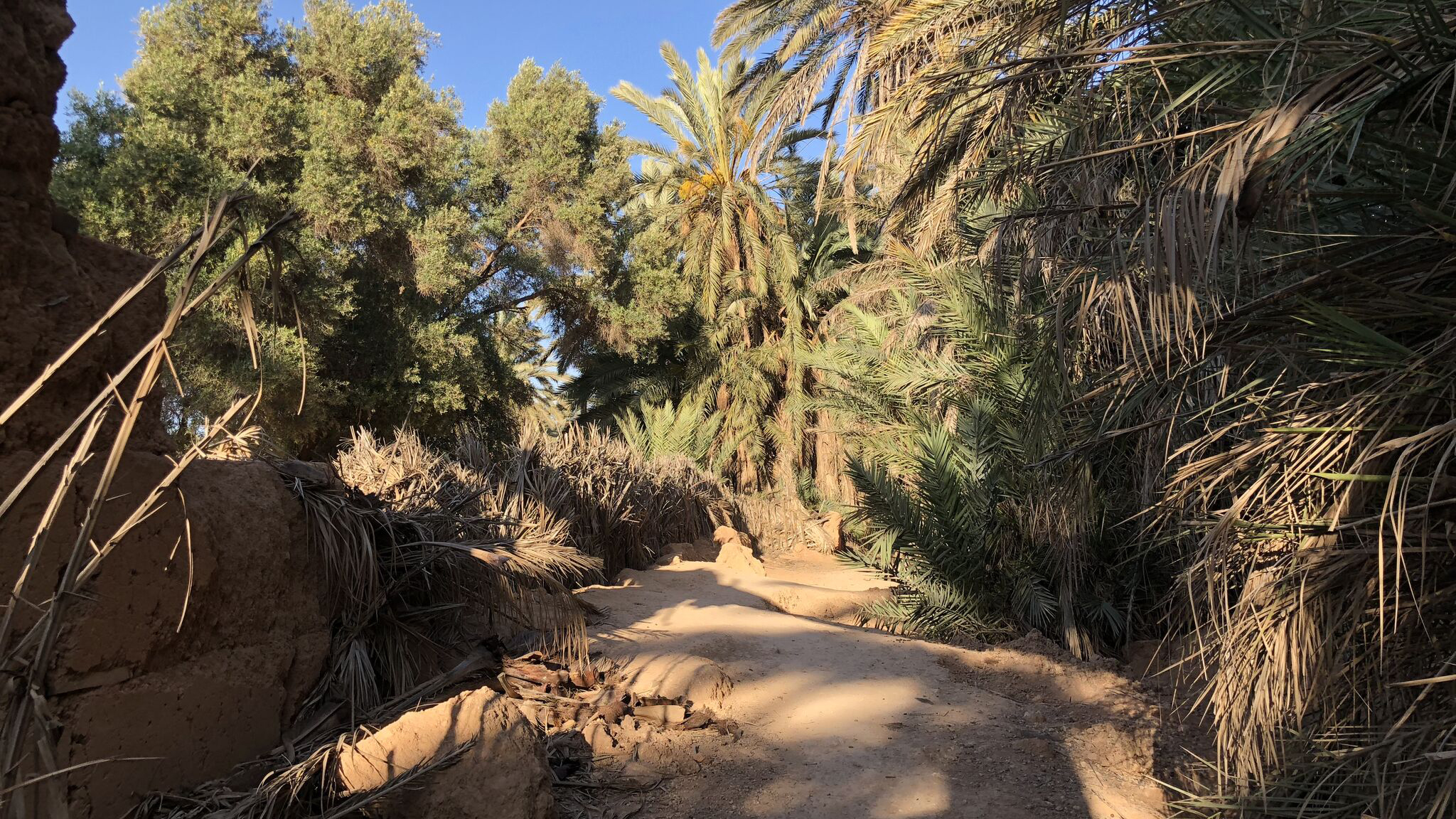 Image result for Amid life at the oasis: exploring undiscovered Morocco
